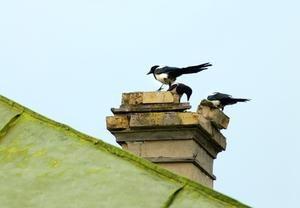 Allamericanchimney Rid Birds Fireplace