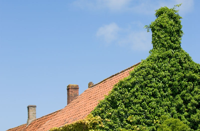 Chimney Ivy Blog Image Louisville Ky All American Chimney Service