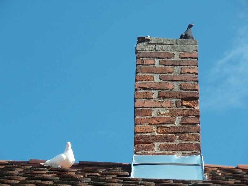 Animals In Chimney Louisville Ky All American Chimney Service